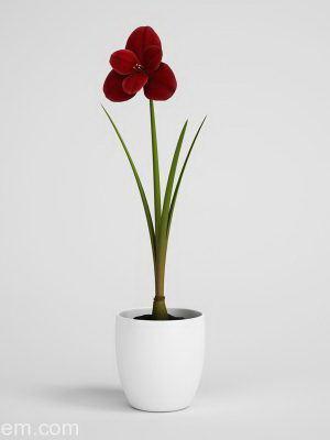 Red Flower in Flower Pot 3D Model
