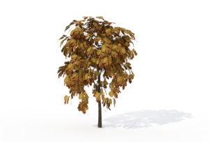Sapling Horse Chestnut Tree 3D Model