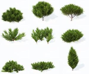 9 Savin Juniper Tree 3D Model