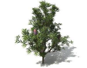 Saw Tree Free 3D Model