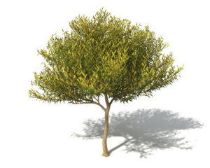 Small Leaf Tree 3D Model