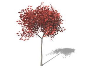 Small Red Maple Tree 3D Model