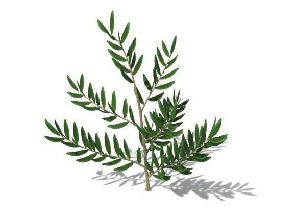 Small Tree Free 3D Model