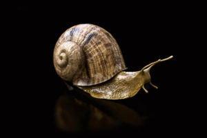 Realistic Snail Free 3D Model