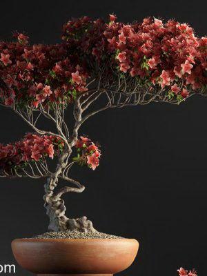 Special Bonsai 3D Model