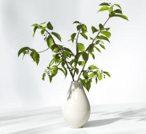Tree Branches in Vase Free 3D Model
