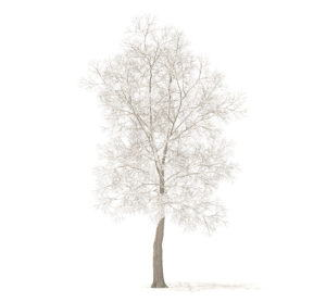 Tree with Snow 3D Model