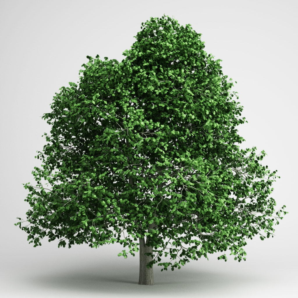 Tree with green foliage 3D Model