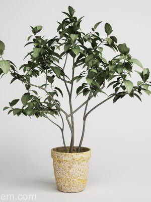 Tree with vase 3D Model