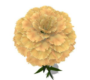White Carnation Flower 3D Model