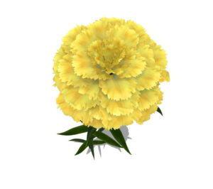 Yellow Carnation Flower 3D Model