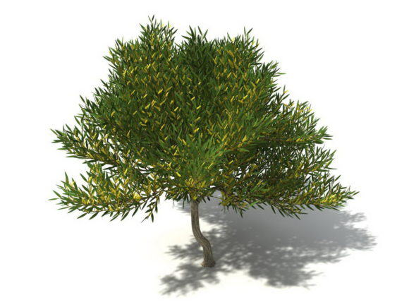Yellow Garden Tree 3D Model