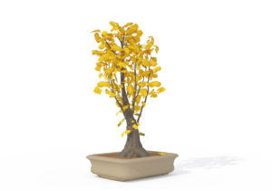 Yellow Ginkgo Biloba Tree 3D Model