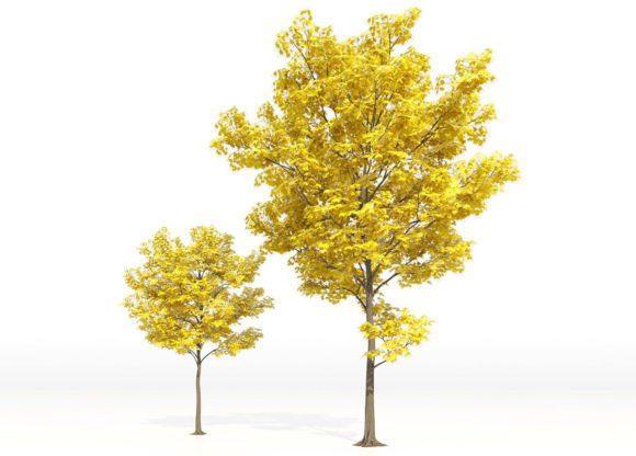 Yellow Leaf Autumn Tree 3D Model