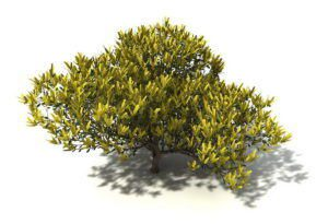 Yellow Leaf Tree 3D Model