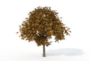 Young Horse Chestnut Tree 3D Model