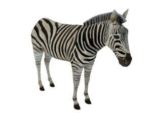 Zebra Free 3D Animal Model