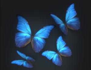 Animated Butterflies Free 3D Model